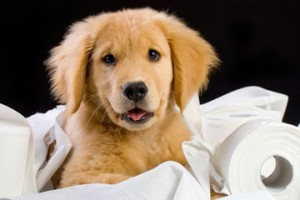 Pet Urine And Odor Removal Carpet Cleaning Service Baton Rouge Louisiana